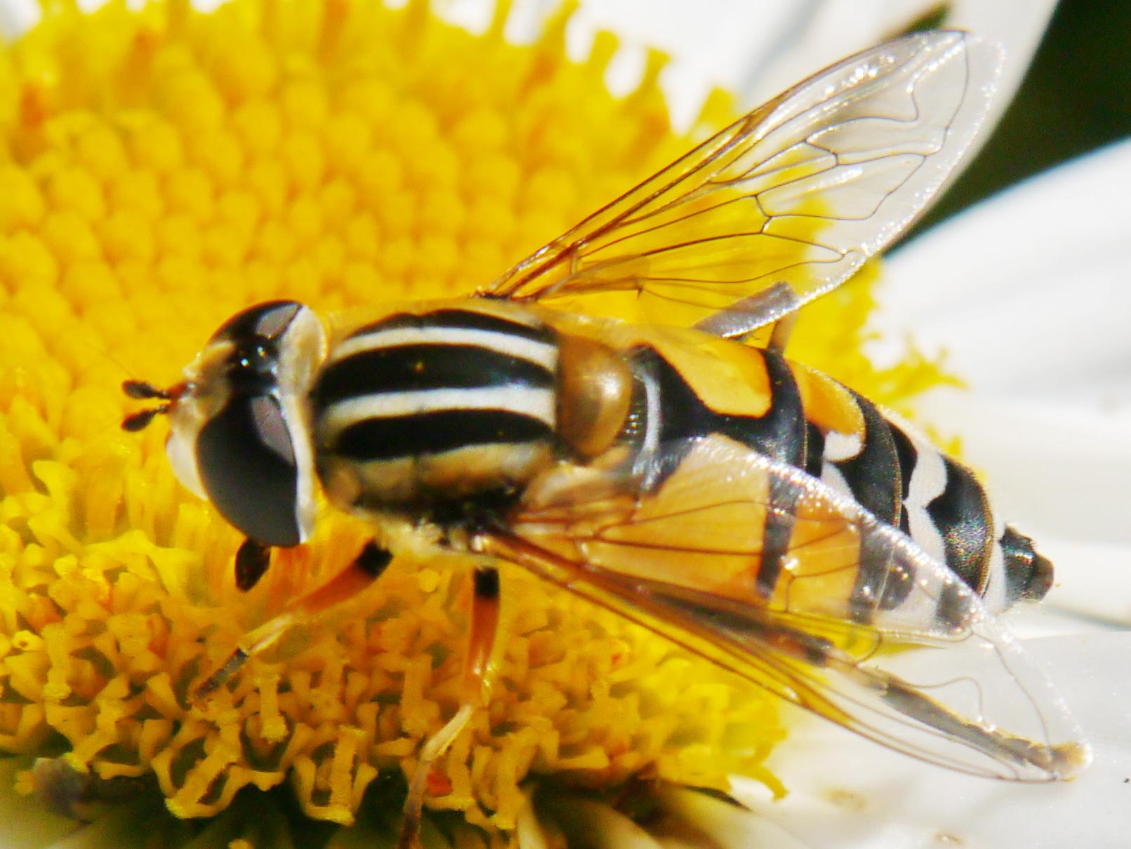 Citaten Over Bijen : Duurzaam deurne nieuws slecht over bijen